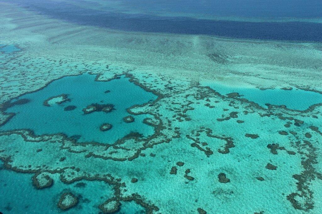 """La intervención """"podría comprar 20 años"""" del colapso de la Gran Barrera de Coral"""