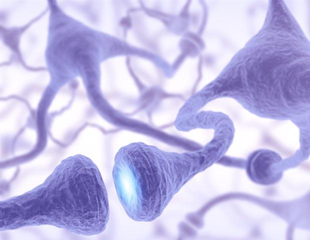 Los científicos han identificado varios genes que son importantes en el desarrollo de las células nerviosas de las moscas de la fruta.