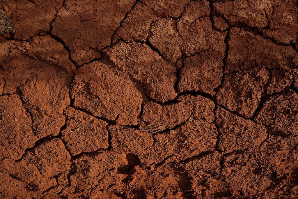En los suelos, la alta variabilidad microbiana conduce a más emisiones de carbono.