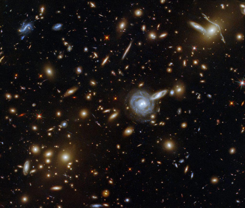 Hubble mira fijamente a un zoológico húngaro
