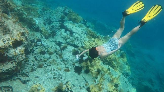 La nueva tecnología de restauración de arrecifes de coral tiene como objetivo revertir los daños causados por el cambio climático