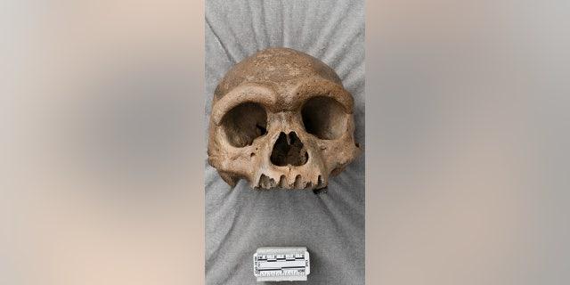 El cráneo recibe el sobrenombre de Dragon Man, que podría ser un nuevo tipo de humano antiguo.