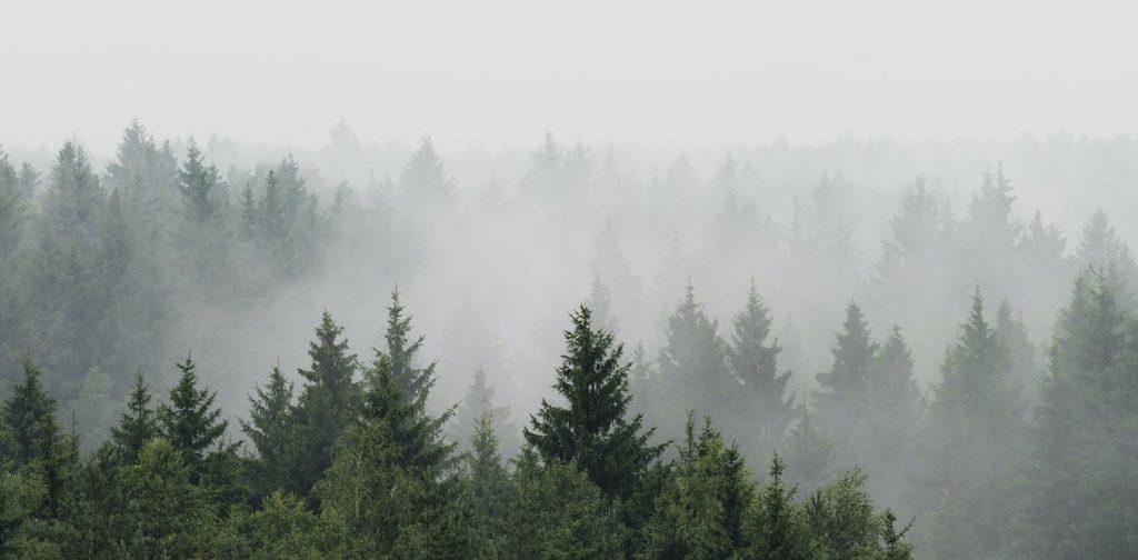 La reforestación de Europa aumentará las precipitaciones: nueva investigación