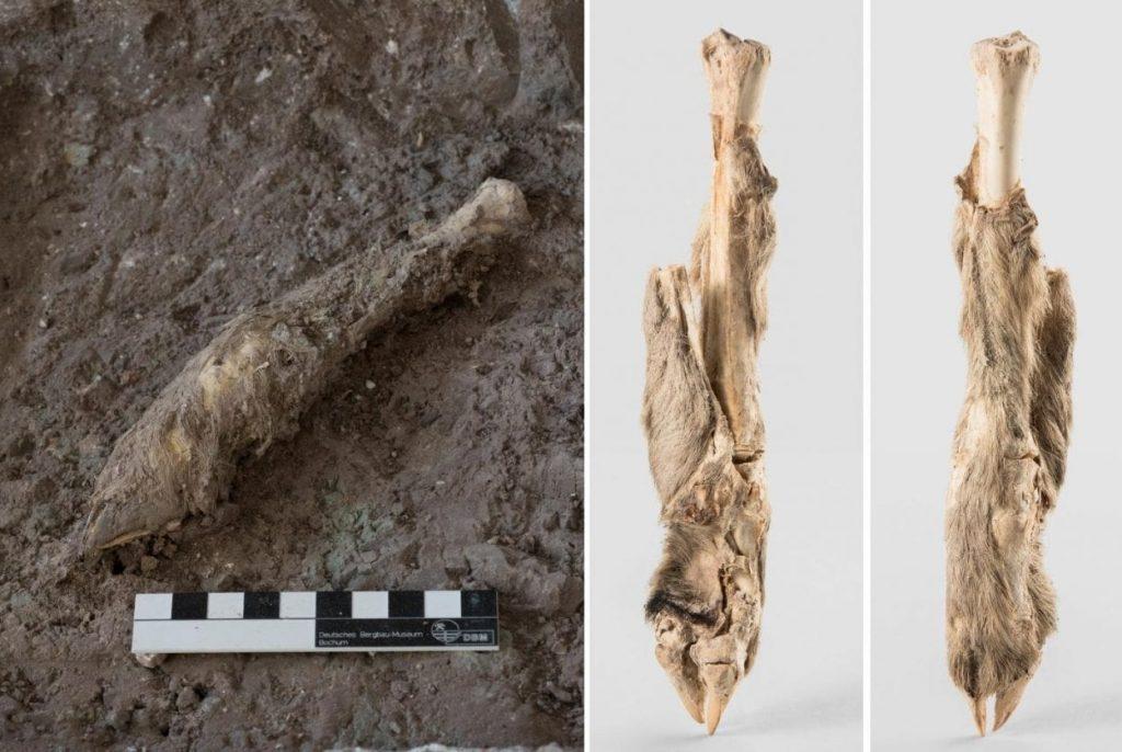 El ADN de una momia de oveja iraní de 1.600 años devuelve la historia a la vida