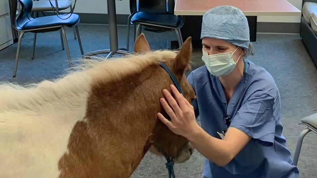 Los caballos bebés alivian el estrés a los trabajadores de la salud afectados por el coronavirus en Walnut Creek - CBS San Francisco